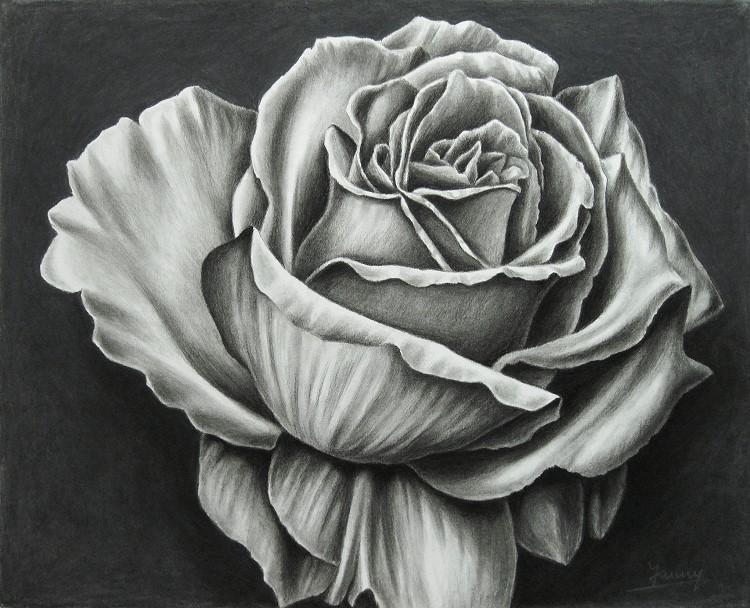 Rose Kohlezeichnung Kunst Gemälde Painting