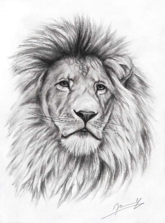 Löwe Zeichnung Kunst