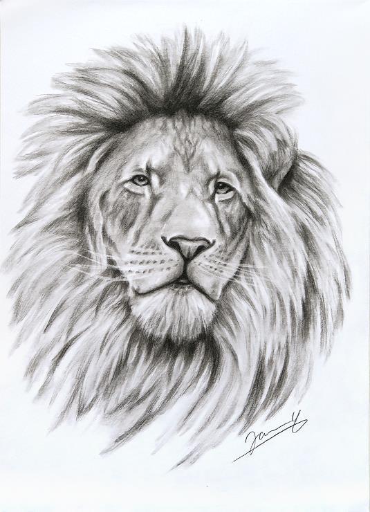 löwe zeichnung kohlezeichnung Kunst