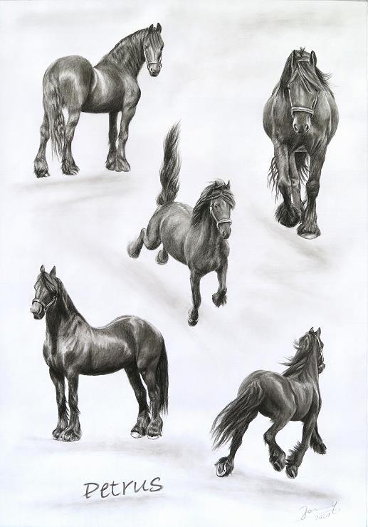 Pferd Zeichnung Portrait Kunst